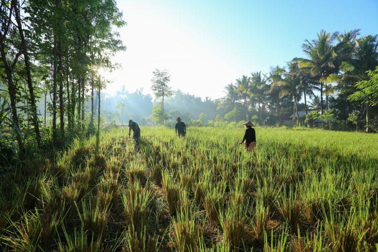 Nagaindo land for sale investment property Kuta Lombok surf yoga villa